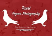 Triest Pigeon Photography